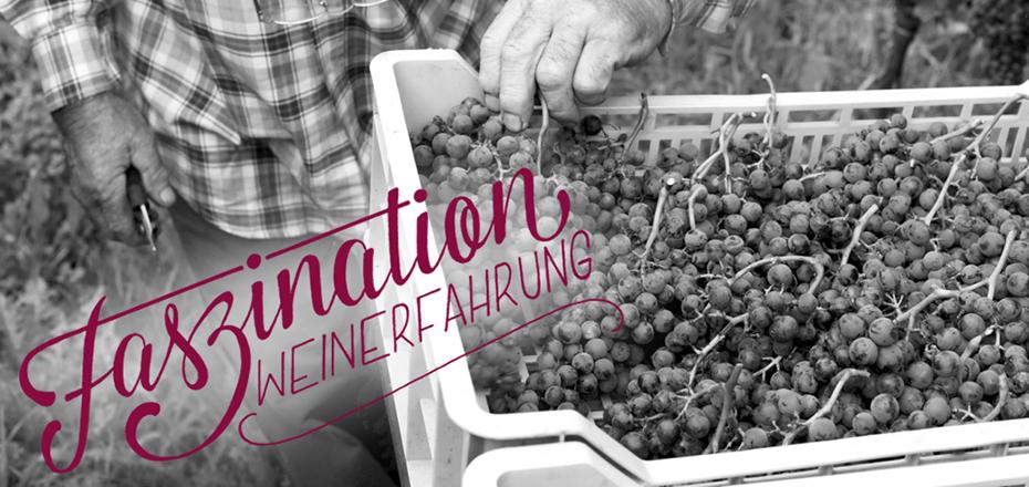 Faszination Weinerfahrung